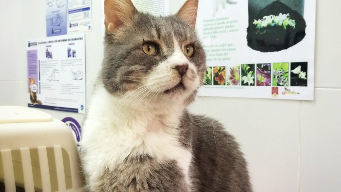 Saving Barney The Gentle Cat Lets Adopt Global