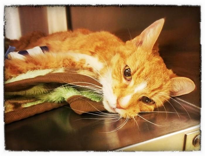 fairy tail gajeel cat