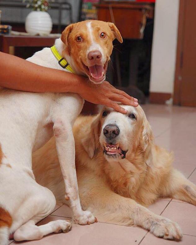 Duke - Let's Adopt! Global