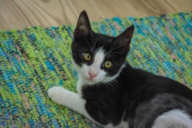 Meemo - Let's Adopt! Global