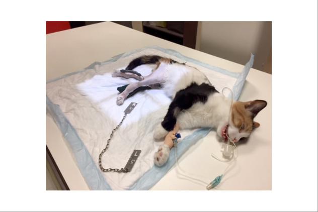 Frankie - Let's Adopt! Global;