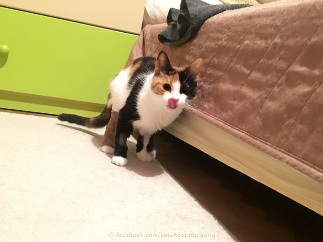 Frankie - Let's Adopt! Global
