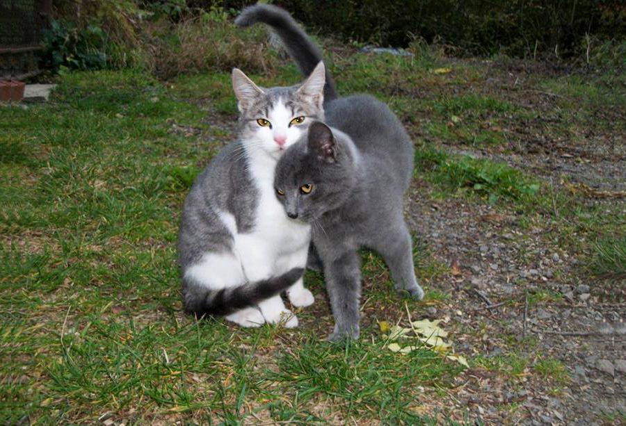 Pisanka - Let's Adopt! Global